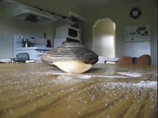 Моллюск ест соль